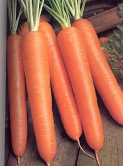 Zanahoria ¿Porque es bueno consumir esta verdura? Enterate
